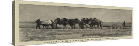 Ploughing with Camels on the Kirghese Steppes, Russia--Stretched Canvas Print
