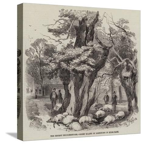 The Recent Thunderstorm, Sheep Killed by Lightning in Hyde Park--Stretched Canvas Print