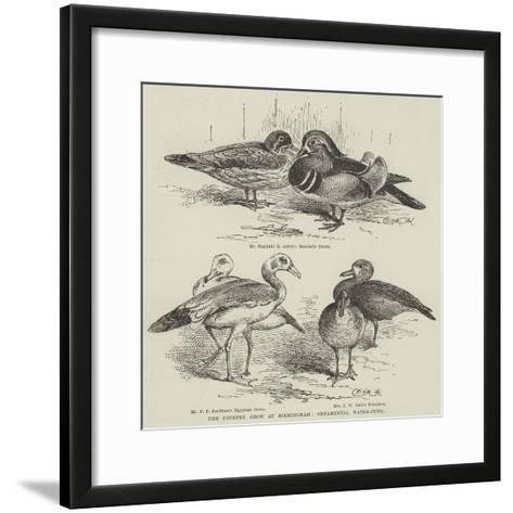 The Poultry Show at Birmingham, Ornamental Water-Fowl--Framed Art Print