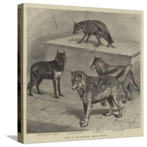 Notes at the Zoological Gardens, Wolves--Stretched Canvas Print