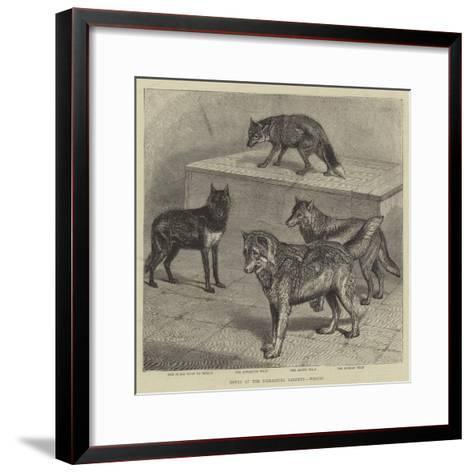 Notes at the Zoological Gardens, Wolves--Framed Art Print