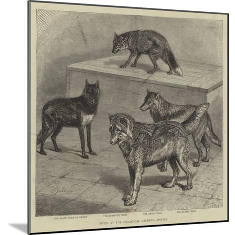 Notes at the Zoological Gardens, Wolves--Mounted Giclee Print