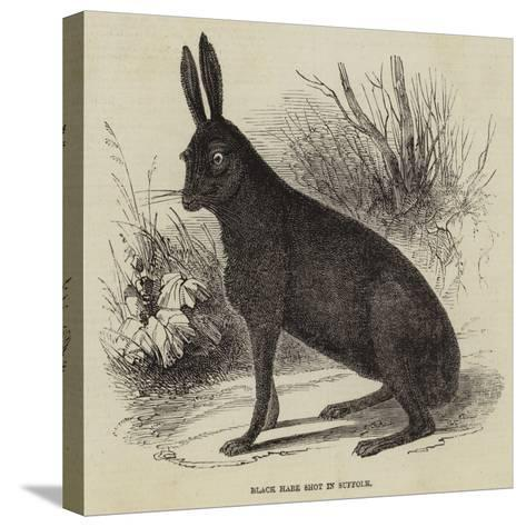 Black Hare Shot in Suffolk--Stretched Canvas Print
