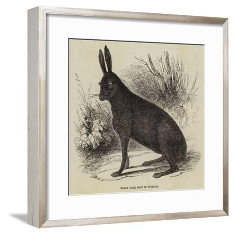 Black Hare Shot in Suffolk--Framed Art Print
