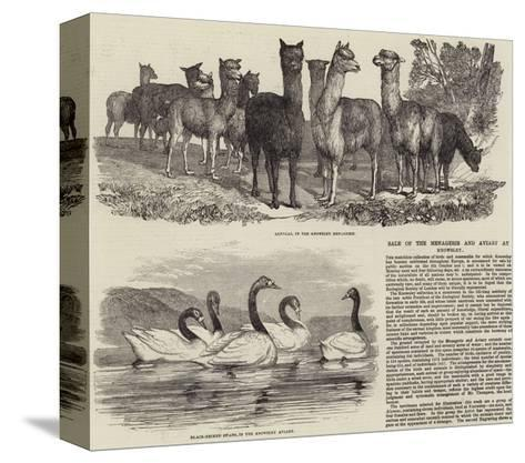 Sale of the Menagerie and Aviary at Knowsley--Stretched Canvas Print