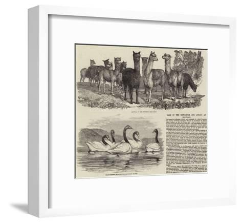 Sale of the Menagerie and Aviary at Knowsley--Framed Art Print