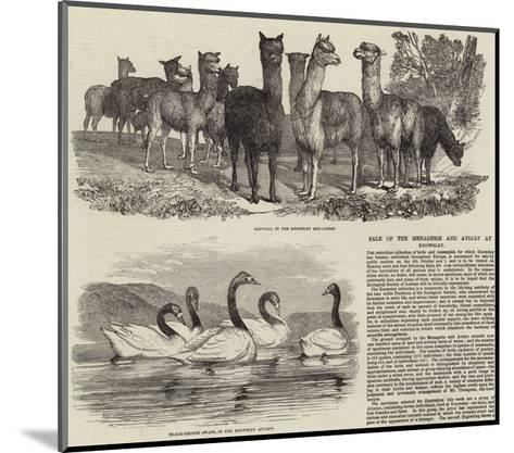 Sale of the Menagerie and Aviary at Knowsley--Mounted Giclee Print