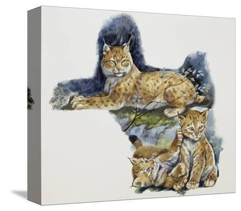 Eurasian Lynx Female (Lynx Lynx) and Her Cubs, Felidae--Stretched Canvas Print