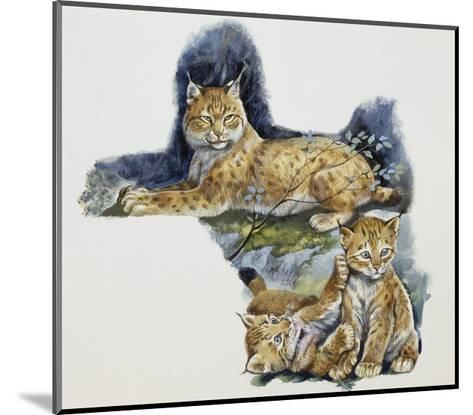 Eurasian Lynx Female (Lynx Lynx) and Her Cubs, Felidae--Mounted Giclee Print