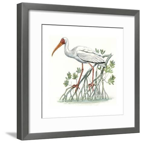 Birds: Ciconiiformes, Milky Stork, (Mycteria Cinerea)--Framed Art Print