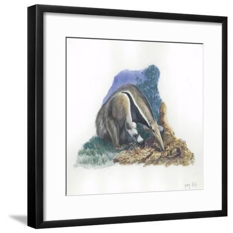 Giant Anteater Myrmecophaga Tridactyla Catching Ants--Framed Art Print