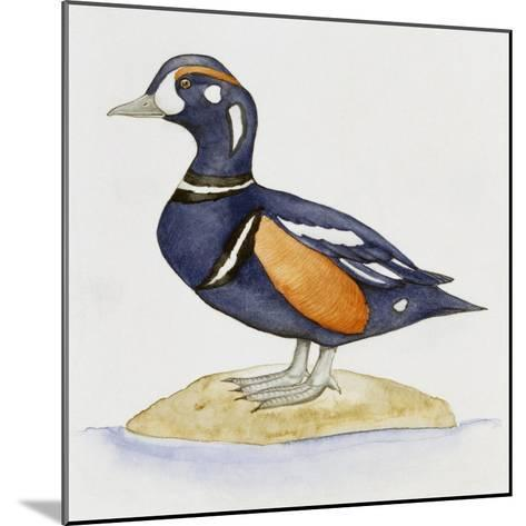 Harlequin Duck (Histrionicus Histrionicus), Anatidae--Mounted Giclee Print