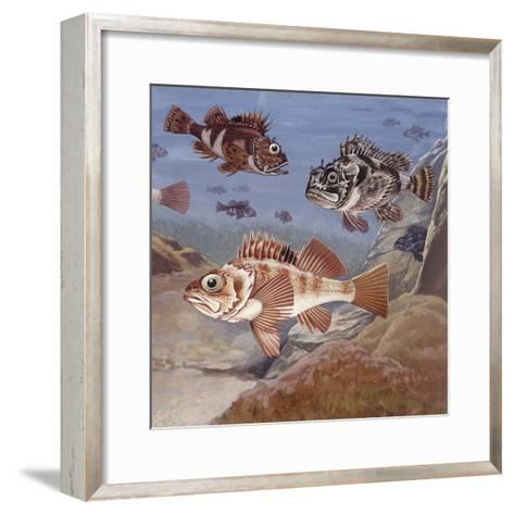 Fishes, Different Examples--Framed Art Print