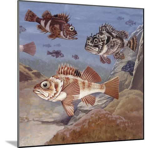 Fishes, Different Examples--Mounted Giclee Print