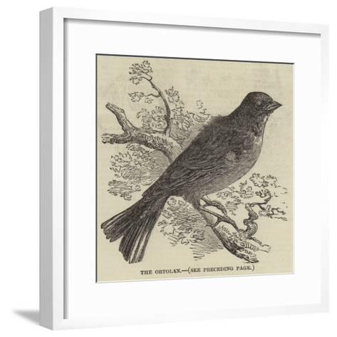 The Ortolan--Framed Art Print