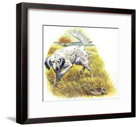 English Setter (Canis Lupus Familiaris) Pointing to Quail--Framed Art Print