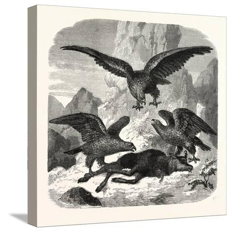 Eagles Fighting over a Chamois, Mountains, 1855--Stretched Canvas Print