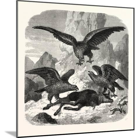 Eagles Fighting over a Chamois, Mountains, 1855--Mounted Giclee Print