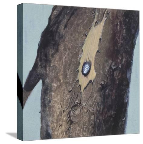 Larva--Stretched Canvas Print
