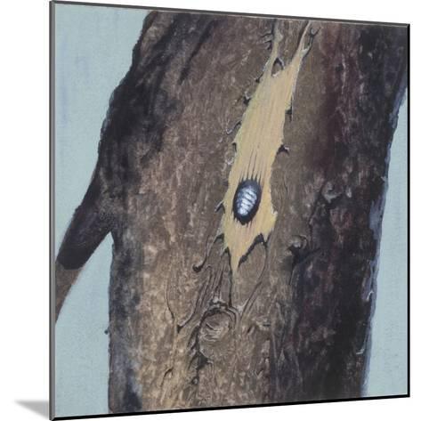 Larva--Mounted Giclee Print