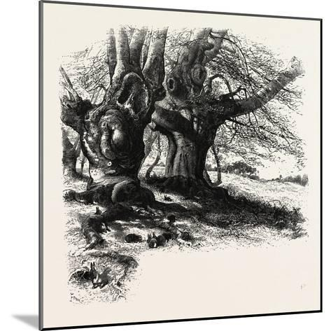 The Forest Scenery of Great Britain: Burnham Beeches, UK--Mounted Giclee Print