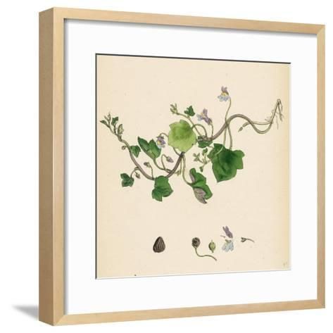 Linaria Cymbalaria Ivy-Leaved Toadflax--Framed Art Print