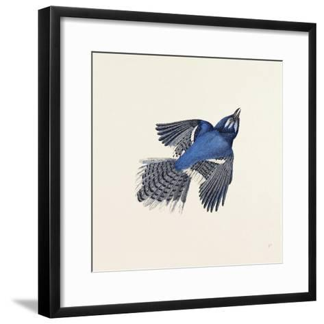 Blue Jay Nineteenth Century--Framed Art Print