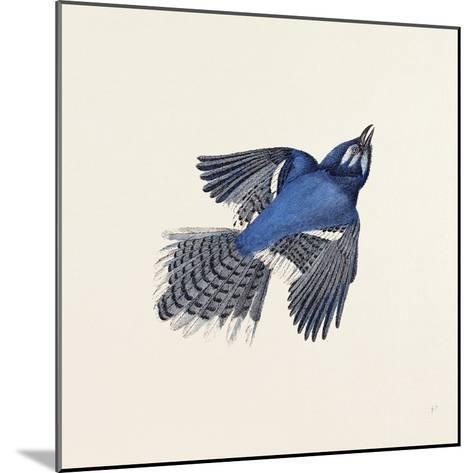 Blue Jay Nineteenth Century--Mounted Giclee Print