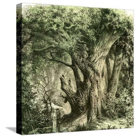 Woods Uk 19th Century--Stretched Canvas Print