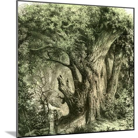 Woods Uk 19th Century--Mounted Giclee Print