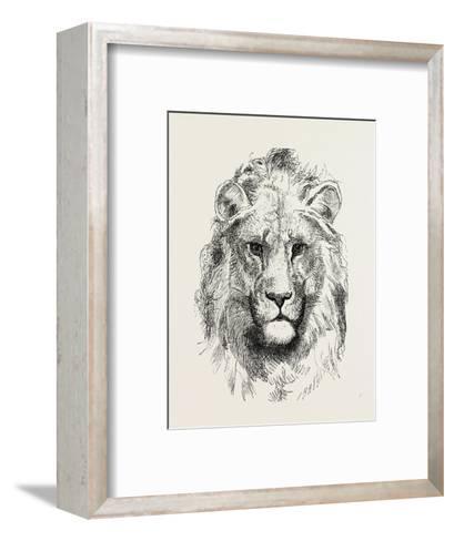 A Modern Lion--Framed Art Print