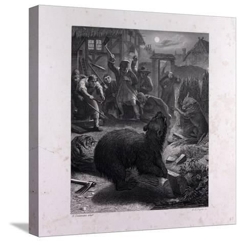 Bruin in the Trap--Stretched Canvas Print