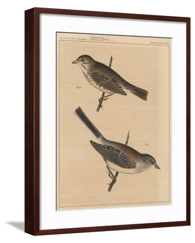 Birds, Plate XXVIII, 1855--Framed Art Print
