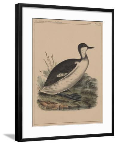 Birds, Plate VIII, 1855--Framed Art Print