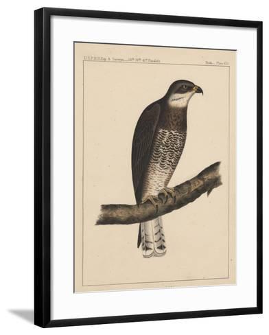 Birds, Plate XIII, 1855--Framed Art Print