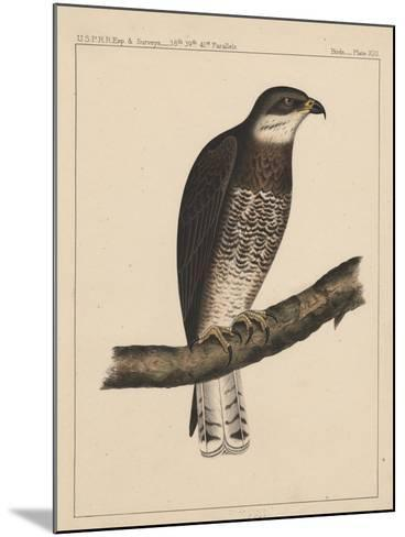 Birds, Plate XIII, 1855--Mounted Giclee Print