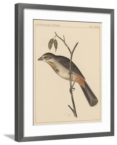 Birds, Plate XXIX, 1855--Framed Art Print