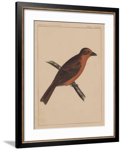Birds, Plate XXXI, 1855--Framed Art Print