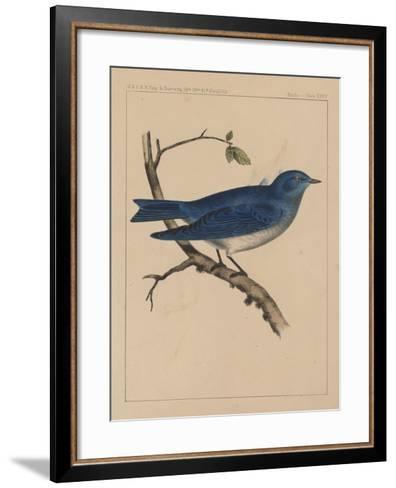 Birds, Plate XXXV, 1855--Framed Art Print