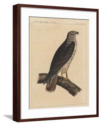 Birds, Plate XVI, 1855--Framed Art Print