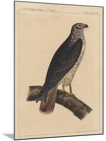 Birds, Plate XVI, 1855--Mounted Giclee Print
