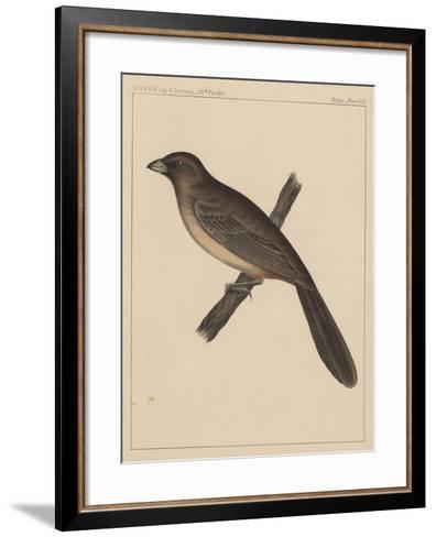 Birds, Plate XXX, 1855--Framed Art Print