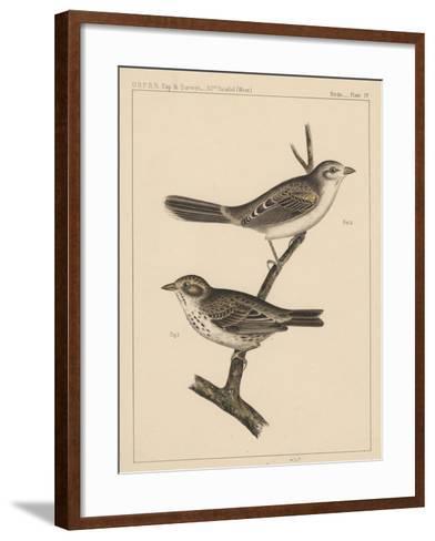Birds, Plate IV, 1855--Framed Art Print