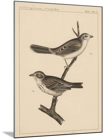 Birds, Plate IV, 1855--Mounted Giclee Print