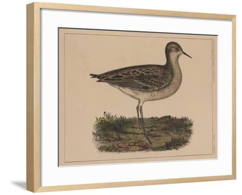 Birds, Plate VI, 1855--Framed Art Print