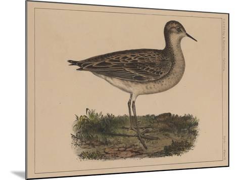 Birds, Plate VI, 1855--Mounted Giclee Print