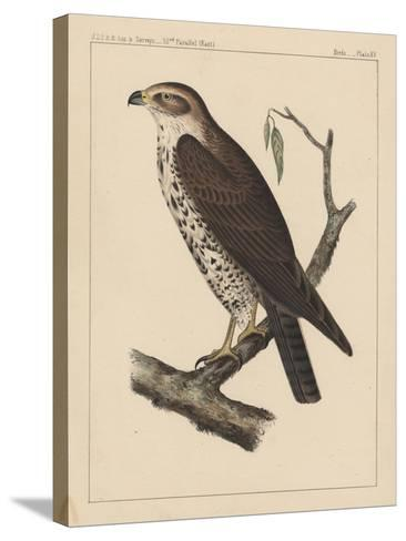 Birds, Plate XV, 1855--Stretched Canvas Print