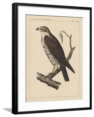 Birds, Plate XV, 1855--Framed Art Print