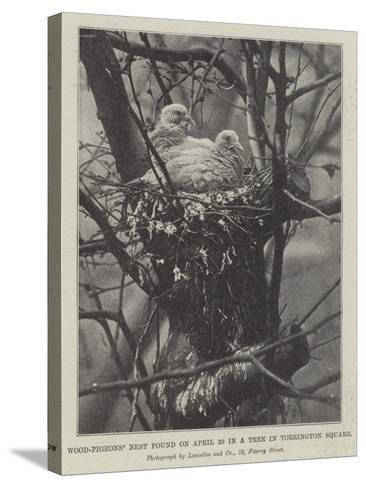 Wood-Pigeons' Nest Found on 20 April in a Tree in Torrington Square--Stretched Canvas Print
