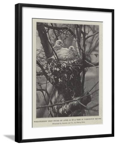 Wood-Pigeons' Nest Found on 20 April in a Tree in Torrington Square--Framed Art Print